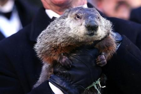 Annual-Groundhog-s-Day-Ritual-Held-In-Punxsutawney-Pennsylvania