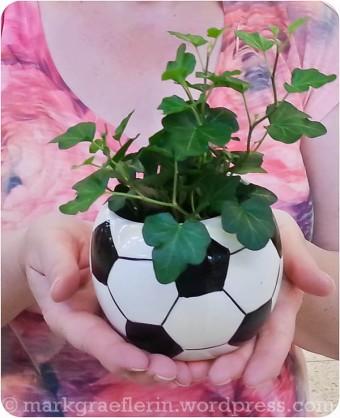 Fussball Pflanze Baumarkt1