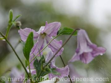 Garten Marguerite14