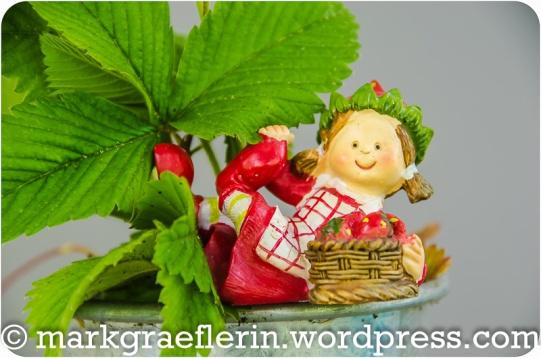 Erdbeer-Basilikum_026