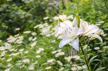Garten Ende Juni_Juli 2016_2