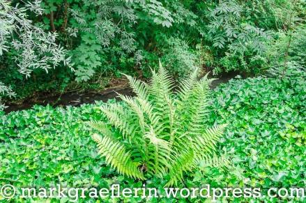 Englischer Garten Hugstetten 7