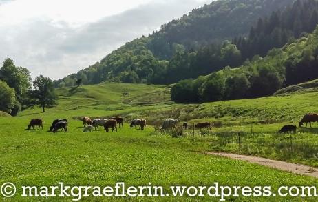 Doubs Wanderung 16