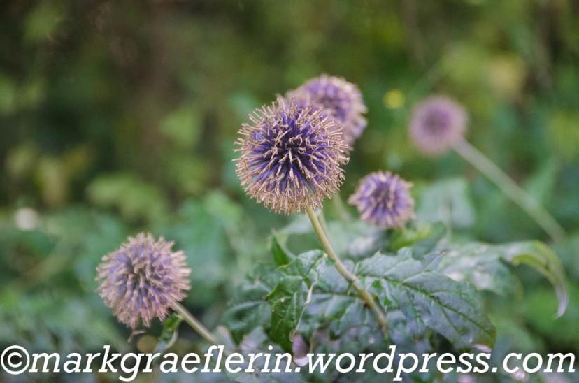 Garten Isbert Preussler 36